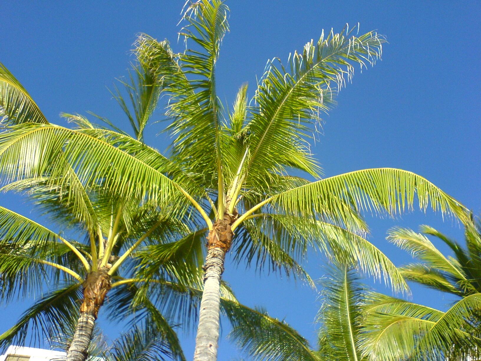 camera phone palm tree