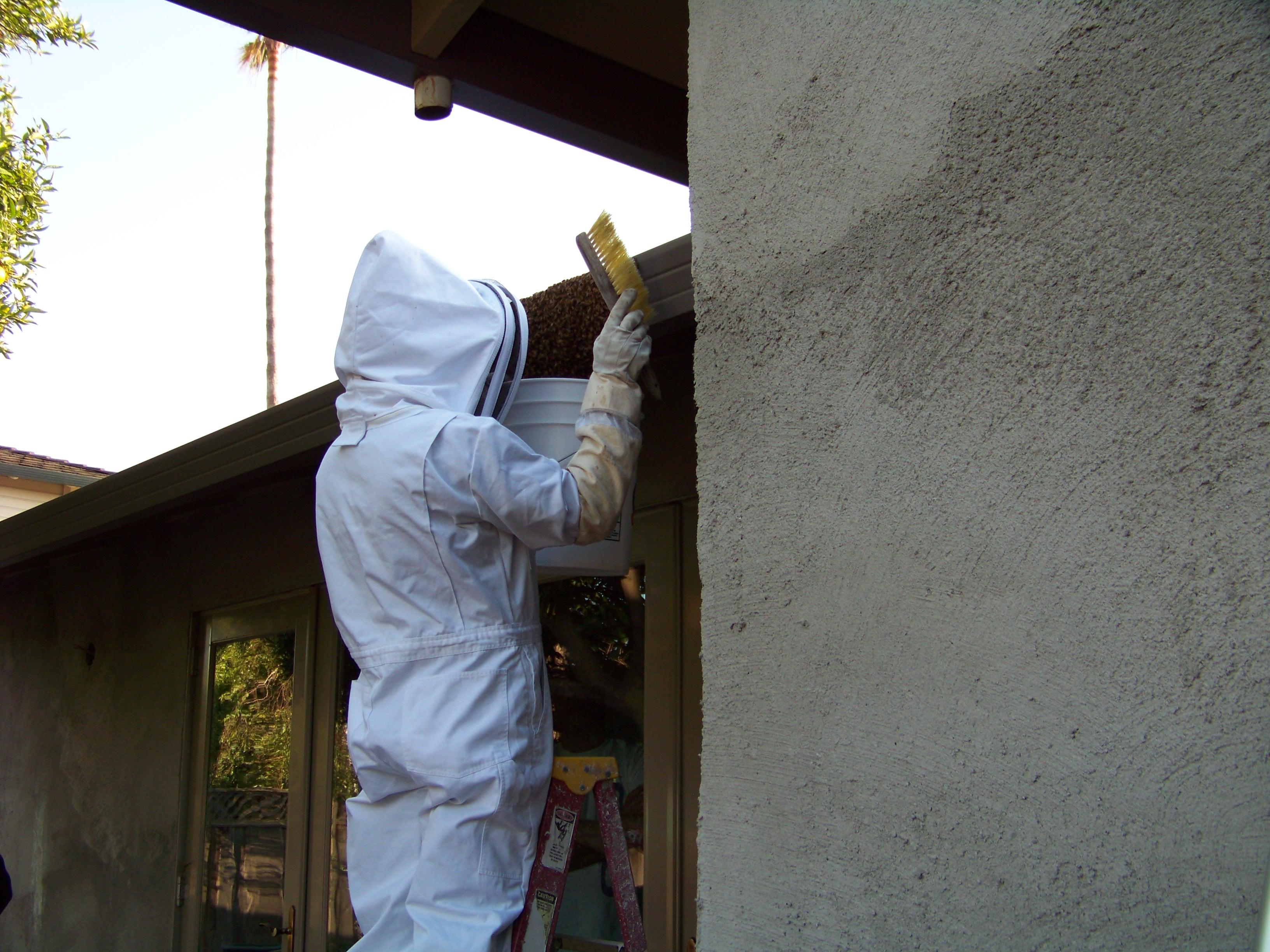 bee keeper 2